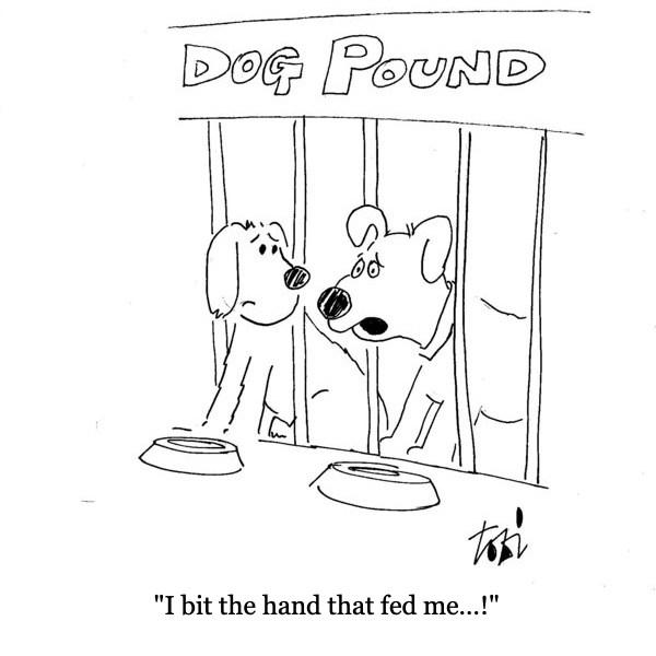 dog_pound.jpg
